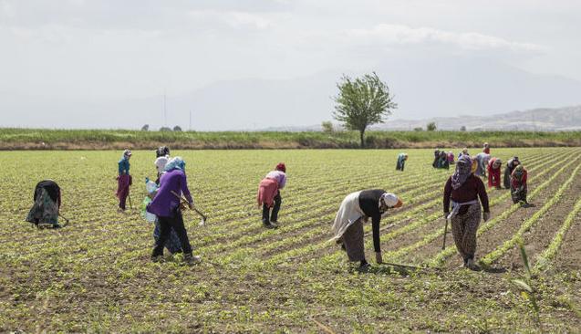 Kurtulmuş'tan çiftçilere müjdeli haber