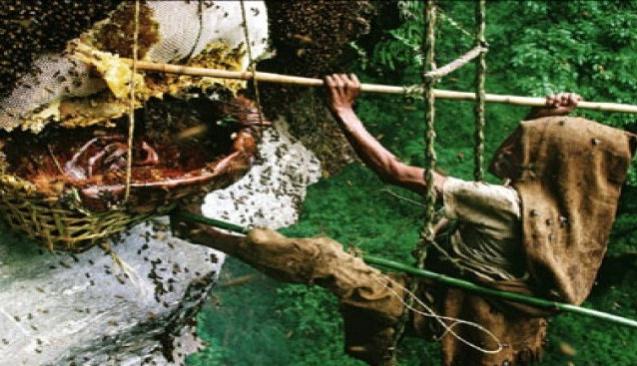 Artvin'de mağaradan çıkarıldı, kilosu 5 bin avrodan satışa sunuldu