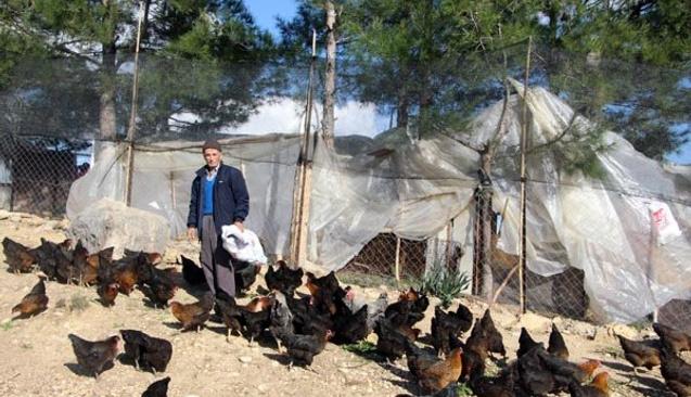 68 Yaşındaki Mehmet Amca Son Parasıyla Girişimci Oldu