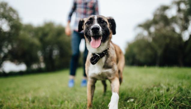 BKM Express İşlemleri Hayvanlara Mama Bağışına Dönüşüyor