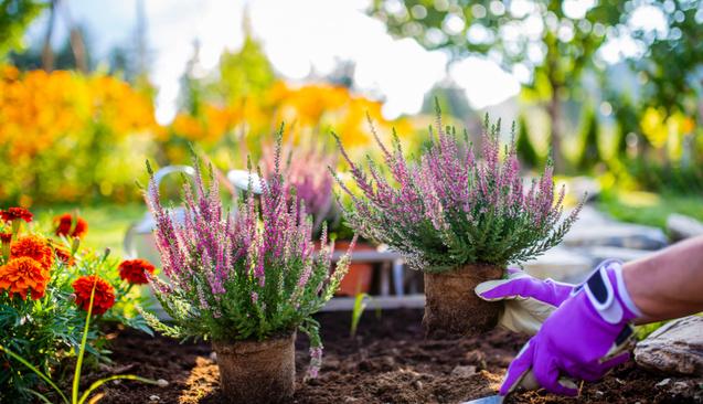 Sonbaharda Bahçe Bakımı Nasıl Yapılır?
