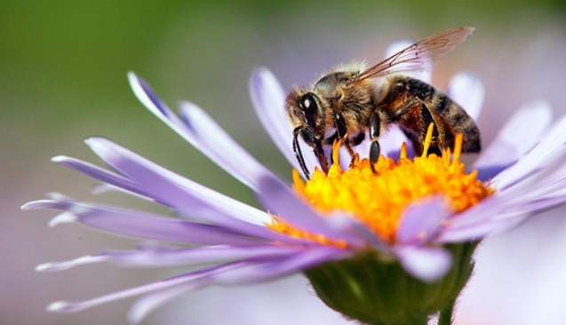 Organik Arıcılığa Destek Verilecek: Başvurular 23 Aralık'a Kadar Sürüyor