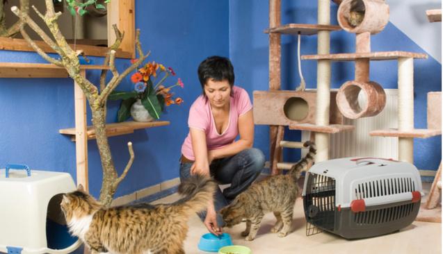 Kedi Köpek Oteli Açmak İçin Gerekenler