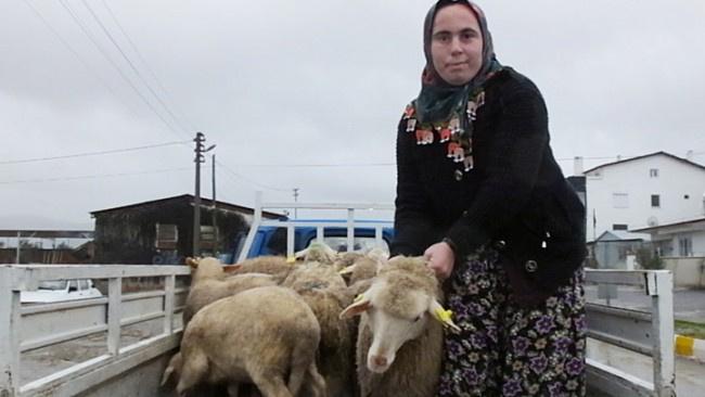 Genç Çiftçi Projesi'yle 40 baş koyunla iş kadını oldu!