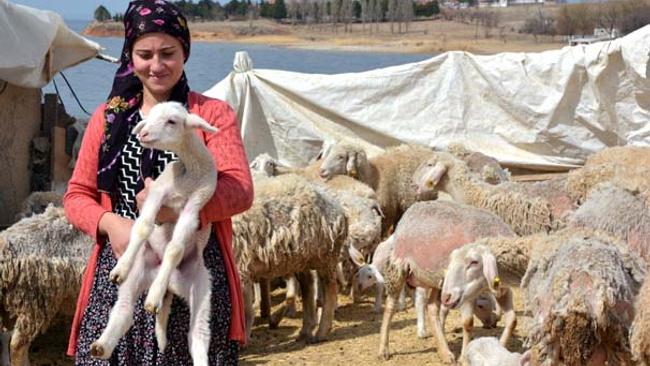 Çobandılar şimdi sürü sahibi oldular