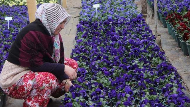 Girişimciliğin yeşil hali! Çiçek tohumlarının kilosundan 25 bin lira kazanıyorlar
