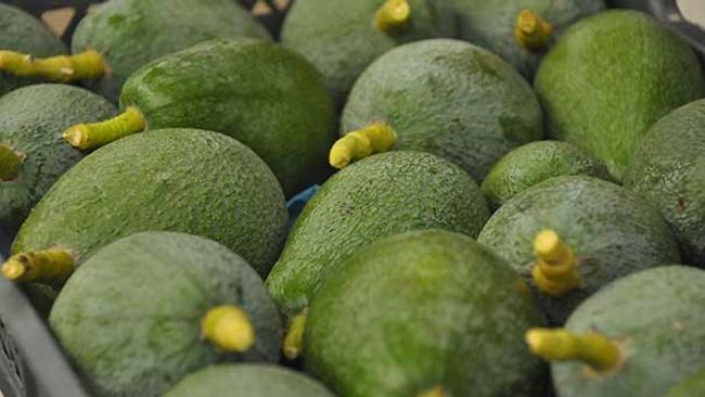 Tanesi 7 liraya satılan meyve üreticinin yüzünü güldürdü