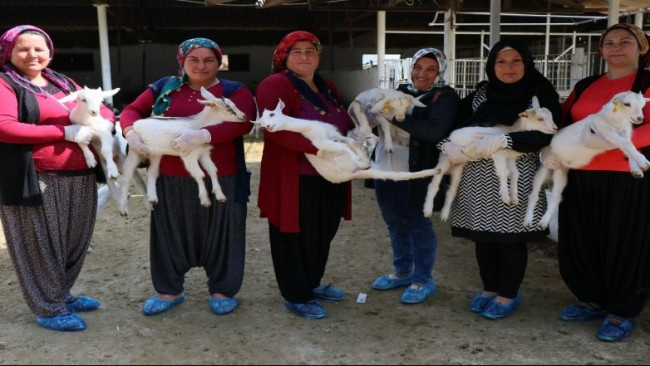 Çobanlık eğitimi alan kadınlar mesleğin bilinmeyen yönlerini anlattı