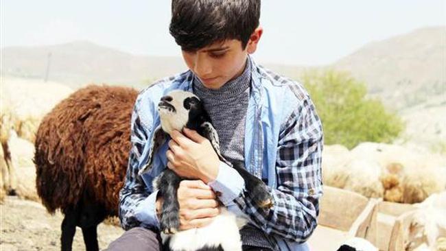 Mazeret üretmedi! Köyünde çobanlık yaparken TEOG'da inanılmaz bir başarı yakaladı